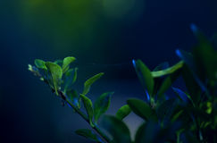 krzak zieleń Obrazy Royalty Free