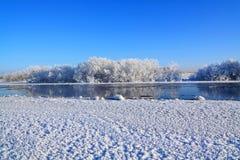 krzaka śnieg Zdjęcie Stock