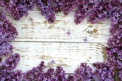 krzaka bzu purpury Tło z przestrzenią dla teksta Fotografia Stock