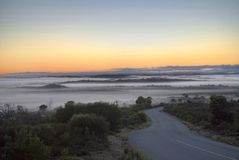 krzaka mgły ranek Zdjęcia Royalty Free