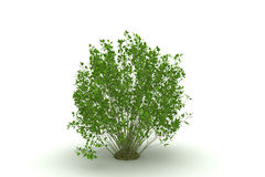 krzaka odosobniony drzewo Fotografia Royalty Free
