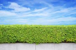 Krzaka ogrodzenie na niebieskim niebie fotografia stock