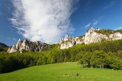 krzaka zielonych gór rockowy lato Fotografia Stock