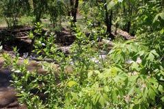 Krzaki Chują rzekę Zdjęcia Stock