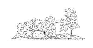 Krzaki i drzewa Obrazy Stock