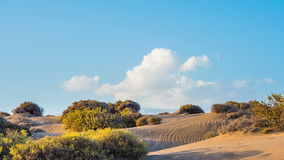 Krzaki trawa na piasku Chmury biegać przez niebo Timelapse zbiory