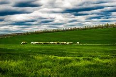 Krzaki w środku pole Fotografia Royalty Free