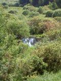 Krzaki wokoło małego stawu w Pogodnym letnim dniu Zdjęcie Royalty Free