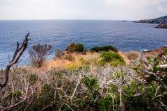 Krzaki z błękitnym morzem Zdjęcie Stock