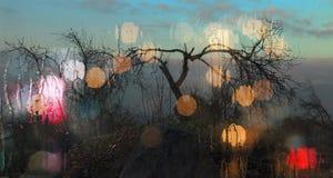 Krzaki z suchymi gałąź Fotografia Royalty Free