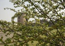Krzemienia kasztel, Walses zieleń rozgałęzia się zdjęcie royalty free