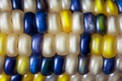 Krzemienia Kukurydzany kolor Zdjęcie Royalty Free