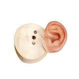 Krzemu sztuczny ludzki ucho z magnesowymi kędziorkami Obrazy Stock