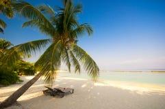 krzesła pokładu drzewko palmowe obrazy stock