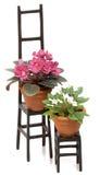 krzesło czarny roślina puszkuje set dwa Fotografia Stock