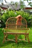 Krzesło Fotografia Royalty Free