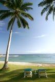 krzesło lounge kurortu palmowi drzewa Obrazy Royalty Free