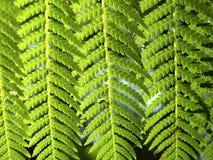 krzewów Fotografia Royalty Free