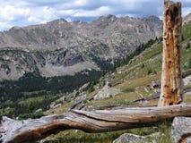 krzyż święty dzikiej przyrody Obrazy Royalty Free