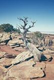 Krzyżuje przetwarzającego nieżywego drzewa, globalnego nagrzania pojęcie Obrazy Royalty Free