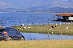 Krzyżuje samochód na polu z kózkami i jeziornym tłem Obrazy Royalty Free