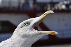 Krzyczący Seagull zdjęcie stock