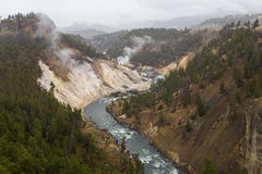 Krzywa w Yellowstone rzece Obraz Royalty Free