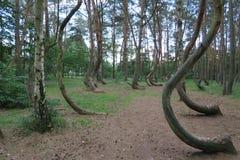 Krzywy Las, el bosque torcido Imágenes de archivo libres de regalías