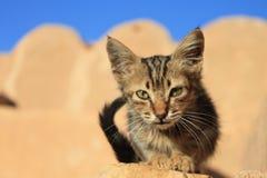 Ksar Ouled Soltane Cat Kitten, Tunesien lizenzfreies stockbild