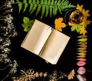 Książka i wszystkie sezony liście zdjęcie stock