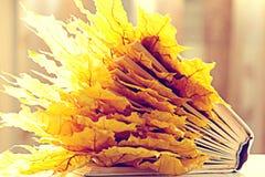 Książek strony z suchymi jesień liśćmi Zdjęcia Stock