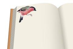 Książka i ptak Obrazy Royalty Free