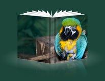 Książka kolorowa papuga Fotografia Royalty Free