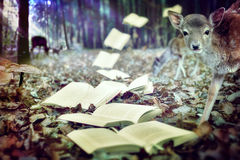 Książki jesieni sezon Obrazy Royalty Free