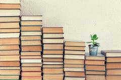 Książki z szczęsliwą rośliną Zdjęcie Royalty Free