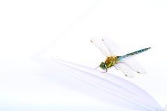 książkowy dragonfly Fotografia Royalty Free