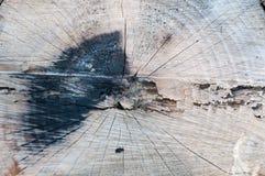 Książkowy drzewo Obrazy Stock