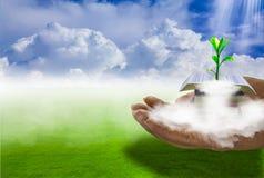 Książkowy stos z dorośnięcie rośliien wierzchołkiem chmury i mgła, pełno , Z gazonu i nieba tłem obraz stock