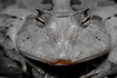 księżniczko smooches żabę księcia Fotografia Stock