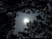 Księżyc światło zdjęcie stock