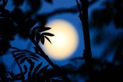 Księżyc światło fotografia royalty free
