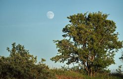 Księżyc światło nad zielonym lasem i wzrost obraz stock