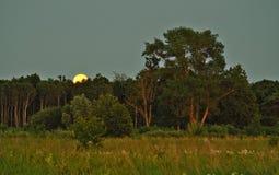 Księżyc światło nad zielonym lasem i wzrost obrazy stock