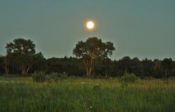 Księżyc światło nad zielonym lasem i wzrost zdjęcie stock