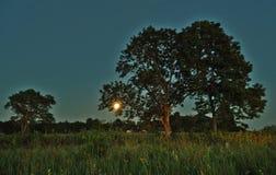 Księżyc światło nad zielonym lasem i wzrost fotografia royalty free