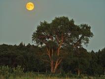 Księżyc światło nad zielonym lasem i wzrost zdjęcie royalty free