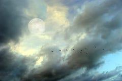 Księżyc Chmurnieje niebo ptaków sylwetkę Obraz Stock