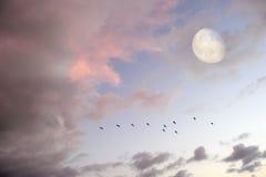 Księżyc Chmurnieje niebo ptaków sylwetkę Zdjęcie Stock