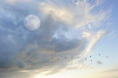 Księżyc Chmurnieje niebo ptaków sylwetkę Obrazy Royalty Free