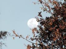 Księżyc drzew rocznika dzień czysty Zdjęcie Stock